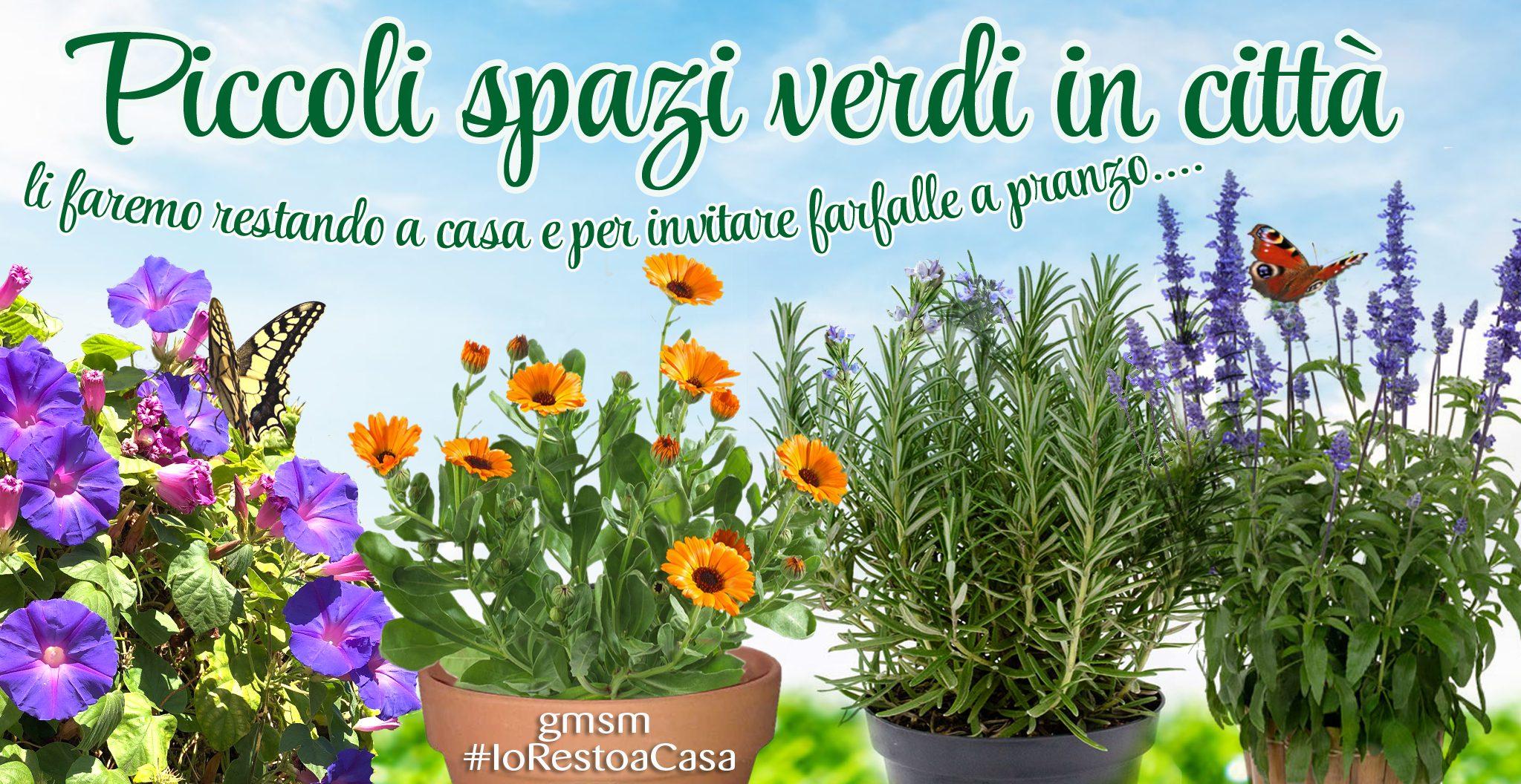 image_url_full